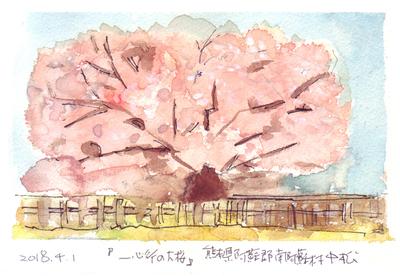一心行の桜s.jpg